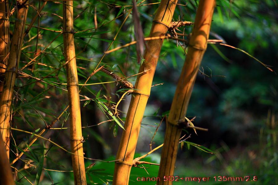 壁纸 动物 风景 鸟 鸟类 雀 植物 桌面 900_600